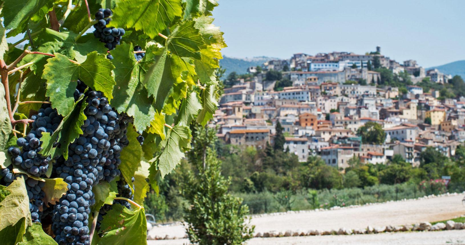 Cori, borgo medievale del Lazio, visto da uno scorcio con vigna della cantina Cincinnato