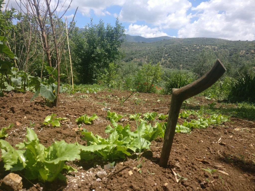 orto rurale con bastone che misura il livello di umidità del terreno